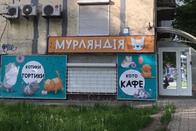 puhnastiki-ta-lasoshhi-yak-u-zaporizhzhi-praczyud194-pershe-ket-kafe.jpg