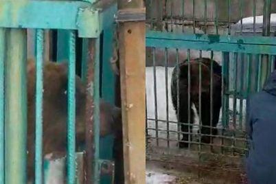 pyateryih-zamuchennyih-medvedey-zaberut-iz-chastnogo-zooparka-pod-donetskom-i-otpravyat-v-vasilevku-video.jpg