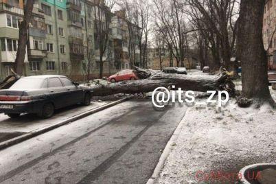 rodilsya-v-rubashke-avto-zaporozhskogo-voditelya-chudom-ne-rastroshhilo-derevom-foto.jpg