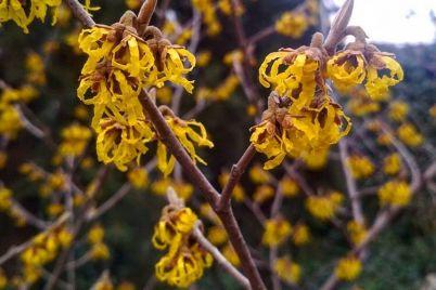 roslini-u-zaporizkomu-botanichnomu-sadu-prodovzhuyut-chiniti-opir-zimi.jpg