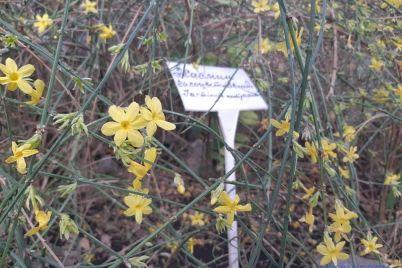 roslini-u-zaporizkomu-botanichnomu-sadu-znov-viperedili-chas.jpg