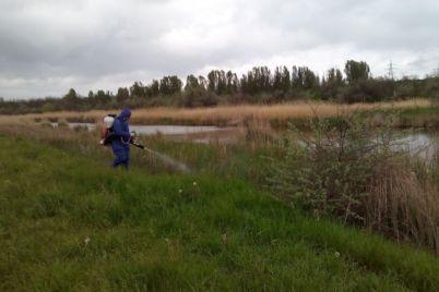 sezon-rozpochato-u-zaporizkij-oblasti-na-vodojmah-travlyat-komariv.jpg