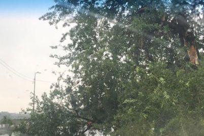 shtorm-v-zaporozhe-hronika-sobytij-obnovlyaetsya-1.jpg