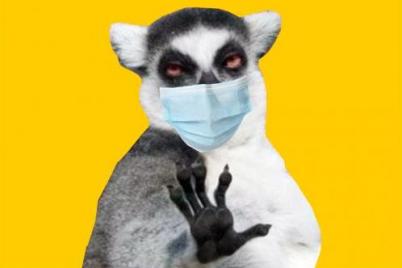 smejsya-v-maske-luchshie-memy-pro-koronavirus.png