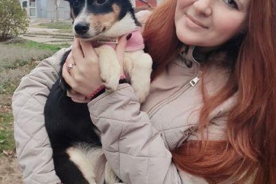 sobaka-kotoruyu-pytalis-ubit-v-zaporozhskoj-oblasti-snyalas-dlya-glyanczevogo-zhurnala-v-nyu-jorke.jpg