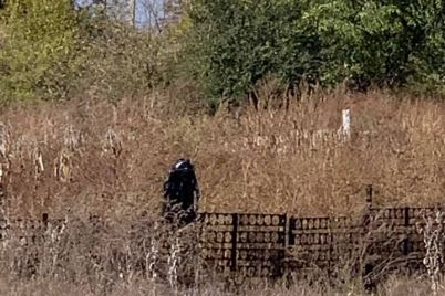 soczseti-v-zaporozhskom-rajone-v-kukuruznom-pole-zametili-strannoe-sushhestvo-foto.jpg