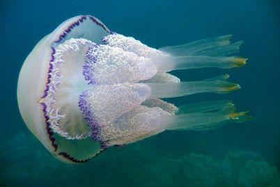 somnitelnoe-lechenie-v-kirillovke-provodyat-obtiranie-meduzami-video.jpg
