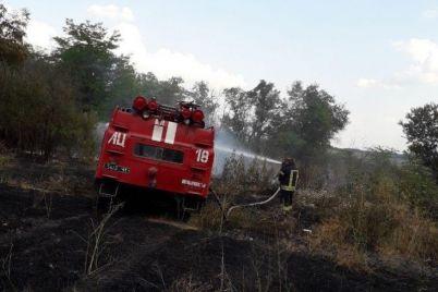 spasateli-i-lesniki-tushili-pozhar-v-zaporozhskoj-oblasti-gorel-les-foto.jpg