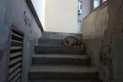stala-izvestna-sudba-zamurovannyh-v-zaporozhskoj-mnogoetazhke-kotyat-foto.jpg
