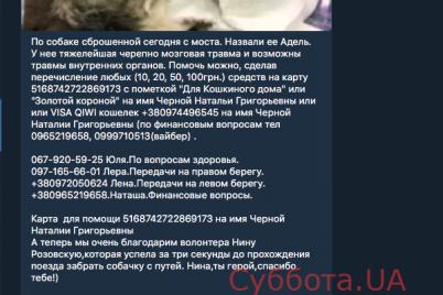 stalo-izvestno-o-sostoyanii-sobaki-kotoruyu-neizvestnyj-sbrosil-s-10-metrovogo-mosta-v-zaporozhe.png