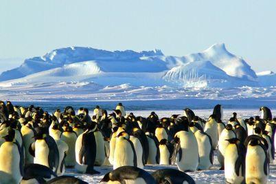 stan-polyarnikom-v-ukraine-otkrylsya-nabor-zhelayushhih-dlya-ekspediczii-v-antarktidu.jpg