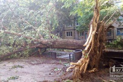 strashnyj-uragan-v-krivom-roge-unes-tri-chelovecheskih-zhizni-video.jpg
