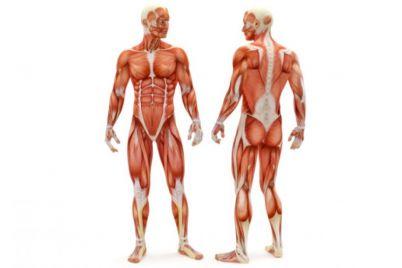 studentam-zaporizkogo-medichnogo-universitetu-teper-bude-legshe-vivchati-anatomiyu.jpg