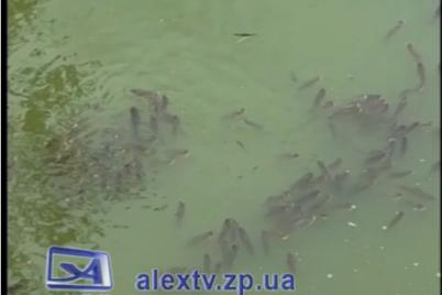 u-czentralnomu-parku-zaporizhzhya-zafiksuvali-masovij-mor-ribi-video.png