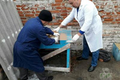 u-pologah-agresivna-lisiczya-napala-na-misczevogo-meshkanczya-tvarinu-dovelosya-vbiti.png