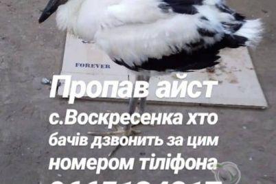 u-rodini-v-zaporizkij-oblasti-znik-ruchnij-leleka.jpg