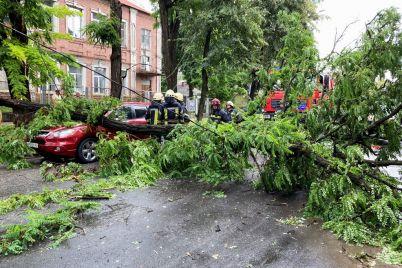 u-zaporizhzhi-uragan-povaliv-derevo-postrazhdali-avto-ta-liniya-elektroperedach.jpg