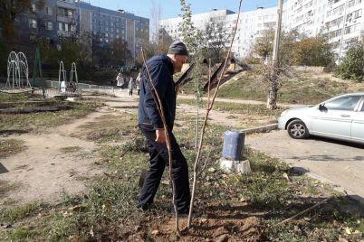 u-zaporizhzhi-v-odnomu-z-rajoniv-posadili-gorihovu-aleyu-foto.jpg