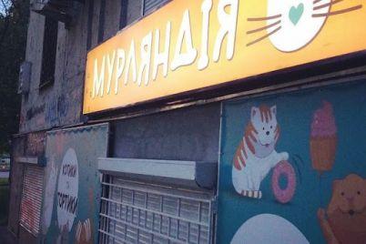 u-zaporizhzhi-vidkrivad194tsya-kafe-dlya-ulyublencziv-kotiv-foto.jpg
