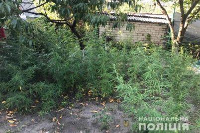 u-zaporizhzhi-znishheno-narkoplantacziyu.jpg