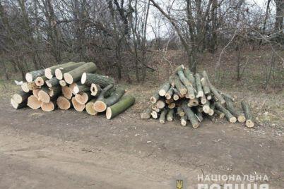 u-zaporizkij-oblasti-kompaniya-chornih-lisorubiv-znishhila-desyatki-derev.jpg