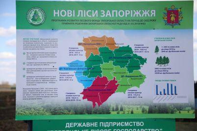 u-zaporizkij-oblasti-vidnovlyuyut-lisi.jpg
