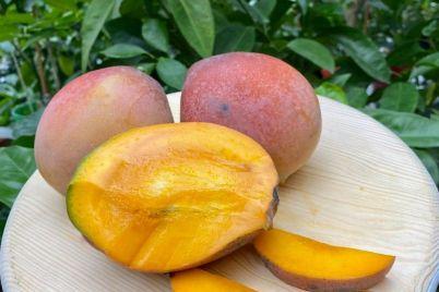 u-zhitelniczy-zaporozhya-doma-sozrel-mango-foto-video.jpg