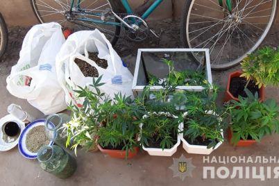 u-zhitelya-zaporozhya-izuyali-marihuanu-na-800-tysyach-griven-foto.jpg