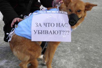 ubili-druga-semi-v-zaporozhskoj-oblasti-s-osoboj-zhestokostyu-udushili-taksu-foto.jpg