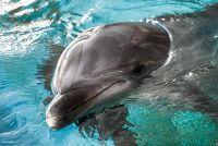 udivitelnoe-ryadom-na-biryuchem-delfiny-priplyli-sovsem-blizko-k-lyudyam-video.jpg