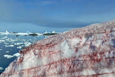 ukrad197nsku-antarktichnu-stancziyu-akademik-vernadskij-otochiv-snig-malinovogo-koloru-foto.jpg