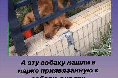 ukrainka-pokazala-chto-proishodit-s-sobakami-kotoryh-brosayut-lyudi-pri-evakuaczii-iz-kitaya-foto.jpg