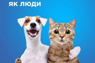 upitannye-domashnie-pitomczy-zaporozhczev-budut-letat-v-salonah-samoleta.jpg