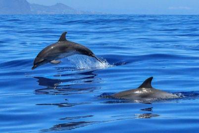 v-azovskom-more-brakonery-lishili-zhizni-beremennogo-delfina-foto.jpg