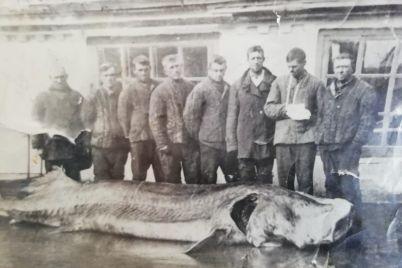 v-azovskom-more-vodilas-czar-ryba-vesom-do-tonny.jpg