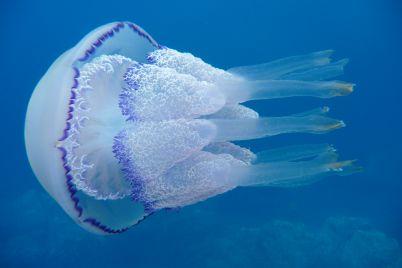 v-azovskomu-mori-vse-chastishe-stali-zustrichatisya-meduzi.jpg