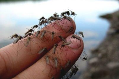 v-berdyanske-nashestvie-komarov-kak-ne-stat-zhertvoj-gnusa.jpg