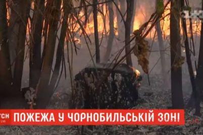 v-chernobylskoj-zone-zagorelsya-les-video.jpg