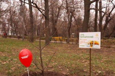 v-czentralnom-parke-zaporozhya-gorozhane-s-aktivistami-vysadili-molodye-dubki-foto.jpg