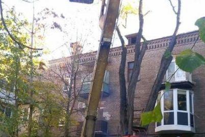 v-czentre-zaporozhya-15-metrovaya-vetka-edva-ne-razrushila-kryshu-mnogokvartirnogo-doma.jpg