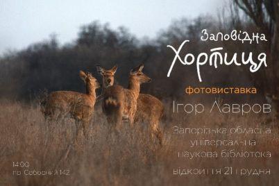v-glavnoj-biblioteke-zaporozhskoj-oblasti-pokazhut-avtorskij-vzglyad-na-horticzu.jpg