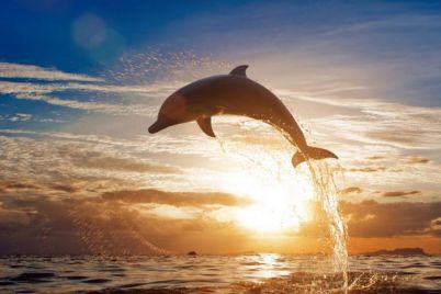 v-hersonskoj-oblasti-delfin-ustroil-na-plyazhe-nastoyashhee-shou-video.jpg