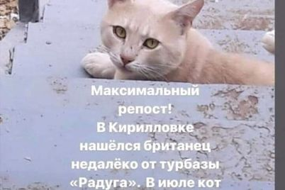 v-kirilivczi-rozshukuyut-hazyad197v-kota-yakij-vtik-vid-nih-u-lipni-foto.jpg