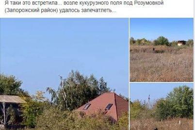 v-kukuruznom-pole-v-zaporozhskoj-oblasti-zametili-zagadochnoe-nechto-foto.jpg