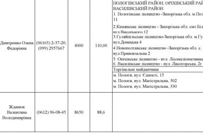 v-lesnichestve-nazvali-czeny-na-novogodnie-elki-v-zaporozhskoj-oblasti.jpg