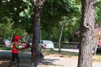v-oleksandrivskomu-rajoni-zaporizhzhya-zajmayutsya-likvidaczid194yu-avarijnih-derev.jpg