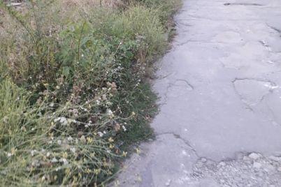 v-spalnom-rajone-zaporozhya-kusty-ambrozii-vyrosli-v-chelovecheskij-rost-foto.jpg