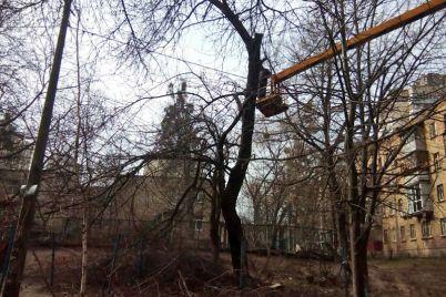 v-zaporizhzhi-komunalniki-vzyalisya-za-kronuvannya-derev.jpg