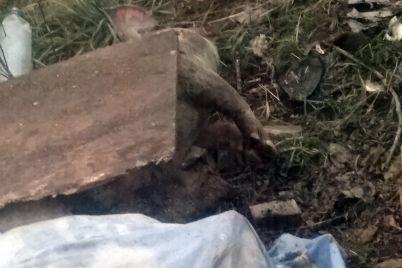 v-zaporizkij-oblasti-pid-vodozabor-pidkinuli-trupi-svinej.jpg