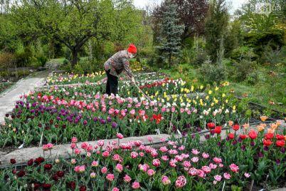 v-zaporozhe-botanicheskij-sad-otkroyut-dlya-gorozhan-pravila-poseshheniya.jpg